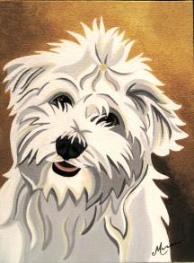 Coton du Tulear puppy